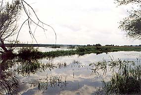 Oder floodplain